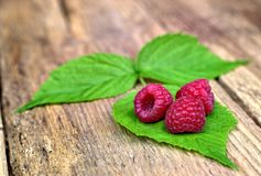 Three fresh raspberries on leaves. Healthy food,agriculture,harvest and fruit concept: three fresh raspberries on leaves and an old wooden background Royalty Free Stock Photography