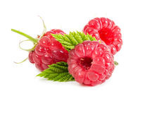Three fresh raspberries on leaves. Isolated on white background Stock Image