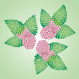 Three fresh raspberry. Natural background in bright colors Stock Photo