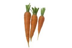 Three fresh raw carrots on the white background. Three fresh raw carrots isolated on the white background Royalty Free Stock Photos