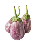 Three fresh raw striped eggplants  isolated on white. Background Stock Image