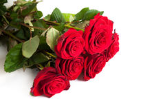 Three fresh red roses over white background Royalty Free Stock Image
