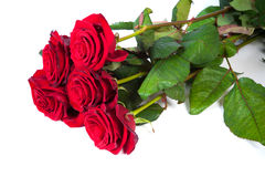 Three fresh red roses over white background Stock Photo