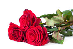 Three fresh red roses over white background Royalty Free Stock Photography