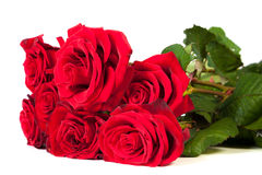 Three fresh red roses over white background Royalty Free Stock Photos