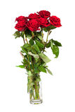 Three fresh red roses over white background Stock Image