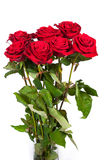 Three fresh red roses over white background Royalty Free Stock Images
