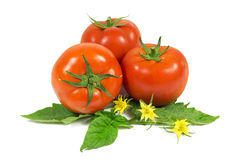Three fresh red tomatoes on green leaves with yellow flowers isolated on white Stock Photography