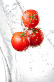 Three Fresh red Tomatoes in splash of water Royalty Free Stock Photo