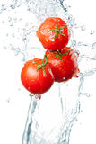 Three Fresh red Tomatoes in splash of water Isolated on white ba Stock Image