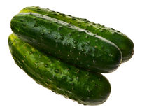 Three fresh ripe cucumbers. Royalty Free Stock Image