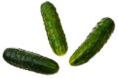 Three fresh ripe cucumbers. Stock Image