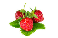 Three fresh ripe strawberries Royalty Free Stock Images
