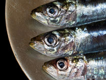 Three fresh sardines on a plate. Royalty Free Stock Images