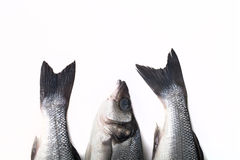 Three fresh sea bass on a light background. Head and two tails. Stock Image