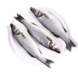 Three fresh seabass fish on plate. Stock Photos
