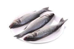 Three fresh seabass fish on plate Royalty Free Stock Images