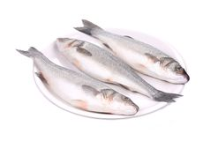 Three fresh seabass fish on plate. Royalty Free Stock Photos