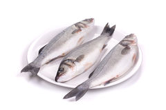 Three fresh seabass fish on plate. Stock Images