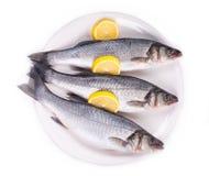 Three fresh seabass fish on plate. Stock Photo
