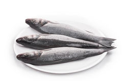 Three fresh seabass fish Stock Photos
