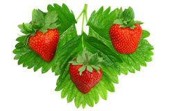 Three fresh strawberries. Isolated Stock Photography