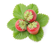 Three Fresh Strawberries with Leaves. Isolated on White Background Stock Image