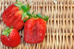Three Fresh Summer Organic Strawberries Still Life,  Stock Image