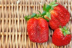 Three Fresh Summer Organic Strawberries Still Life, XXXL backgro Royalty Free Stock Photo