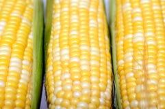 Three fresh sweet corns Royalty Free Stock Image