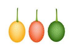 Three Fresh Teasel Gourds on White Background Stock Photos