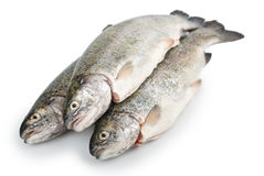 Three fresh trout fish, diagonal Stock Images