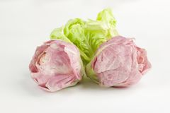 Three tufts of chicory rose and green isolated on white. Three  fresh tufts of chicory rose and green isolated on white, healthy eating Royalty Free Stock Photos