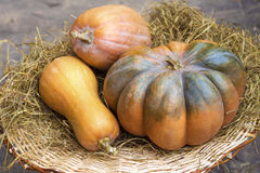 Three fresh whole pumpkins of different shapes Stock Images