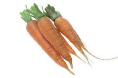 Three fresh whole raw carrots on the white background. Isolated three fresh whole raw carrots on the white background Royalty Free Stock Photo