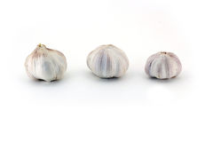 Three fresh Young bulbs of garlic neatly isolated on white background Royalty Free Stock Images