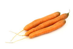 Three freshly harvested carrots Stock Image
