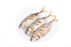 Three fried mackerel fishes isolated Stock Image