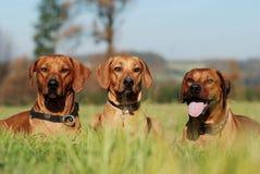 Three friends Stock Image
