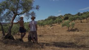 Three friends in the field. Three friends watch a flock of sheep in the field stock footage