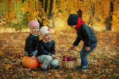 Three friends kids in autumn leaves with pumpkins and apple Stock Photos