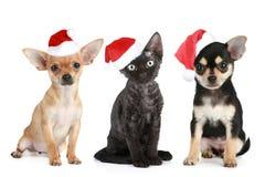 Three friends in Santa caps Stock Photo