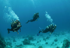 Three friends scuba diving together stock photography