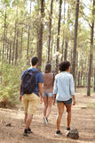 Three friends walking in the forest. Three friends walking in a pine tree plantation in afternoon sunshine while wearing casual clothing Stock Photography