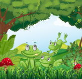 Three frogs at the forest Stock Images