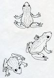 Three frogs. Three hand drawn spotted frogs in different poses. Ink drawing, sketch Royalty Free Stock Images