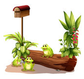 Three Frogs Near The Wooden Mailbox Royalty Free Stock Image