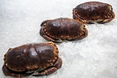 Three frozen crabs lie in a row. Among the ice Royalty Free Stock Images