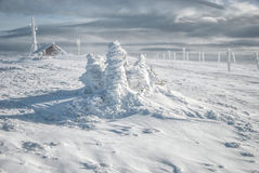 Three frozen fir trees. Three small, frozen fir trees, completely covered by snow and lot of pillars, a log house and antenna in the distance, against cloudy sky Stock Photo
