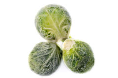 Three frozen sprouts Royalty Free Stock Image